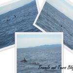 Dolphin and Whales 150x150 Ocean Jet Schedule and Rates Of travel