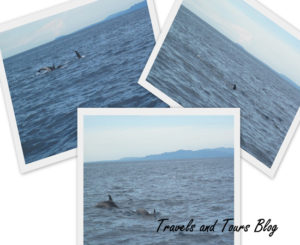 Dolphin and Whale Watching, balicasag islang, bohol